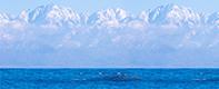 富山の海洋深層水の特徴